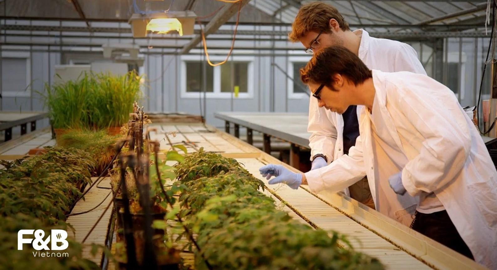 Ngành trồng trọt sẽ có bước tiến đáng kể trong tương lai