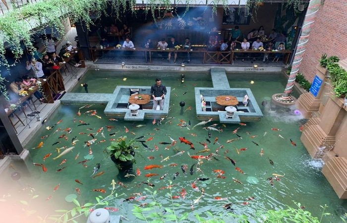 kinh nghiệm mở quán cafe cá Koi