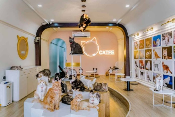 Mở Quán Cafe Mèo