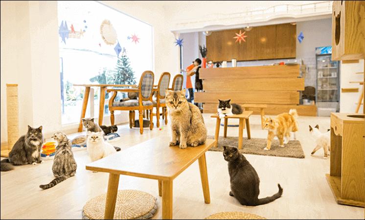 Những Chú Mèo Đáng Yêu Tại Quán Cafe